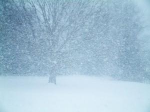 antitrust blizzard